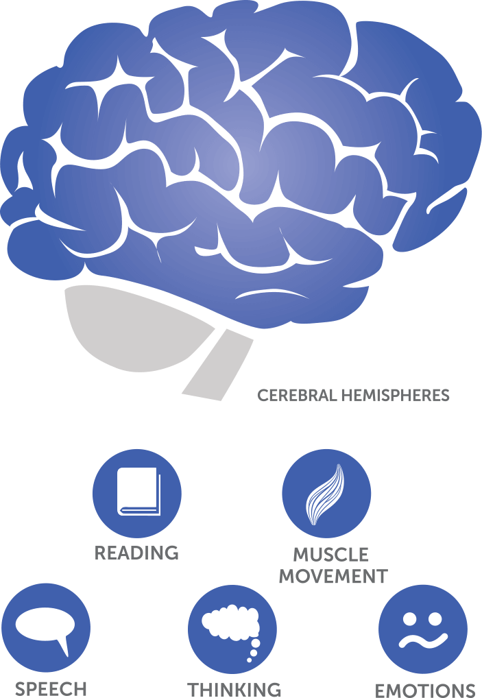 Where does glioblastoma (GBM) occur in the brain?